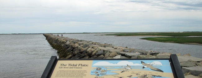 McDade Encaustic Tidal Flats crop