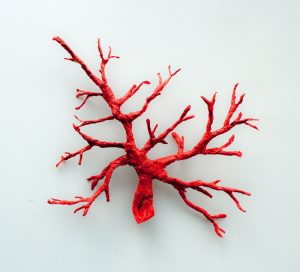 ECOAGE_ Emmaline Payette_Galapagos_Coral_Red3