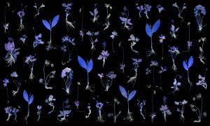 "Krista Leesi Millefleur… waiting for the unicorn 2016, fabric, digital print, 118"" x 197"". Photo: Heino Prunsvelt."