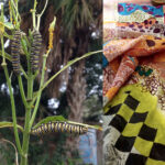 Deconstructing Nature with Kerr Grabowski